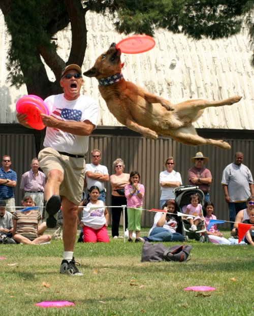 Rocket with frisbee dogs
